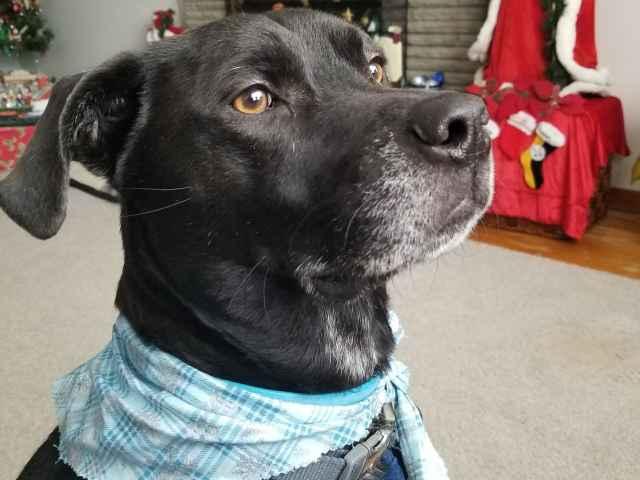 Dogs avid pet recovery platform for Avid dog